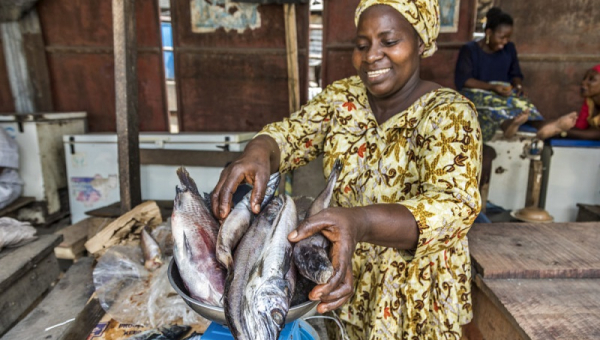 Nigeria leads Africa's Frozen Whole Fish Market with $488M of Imports in 2018