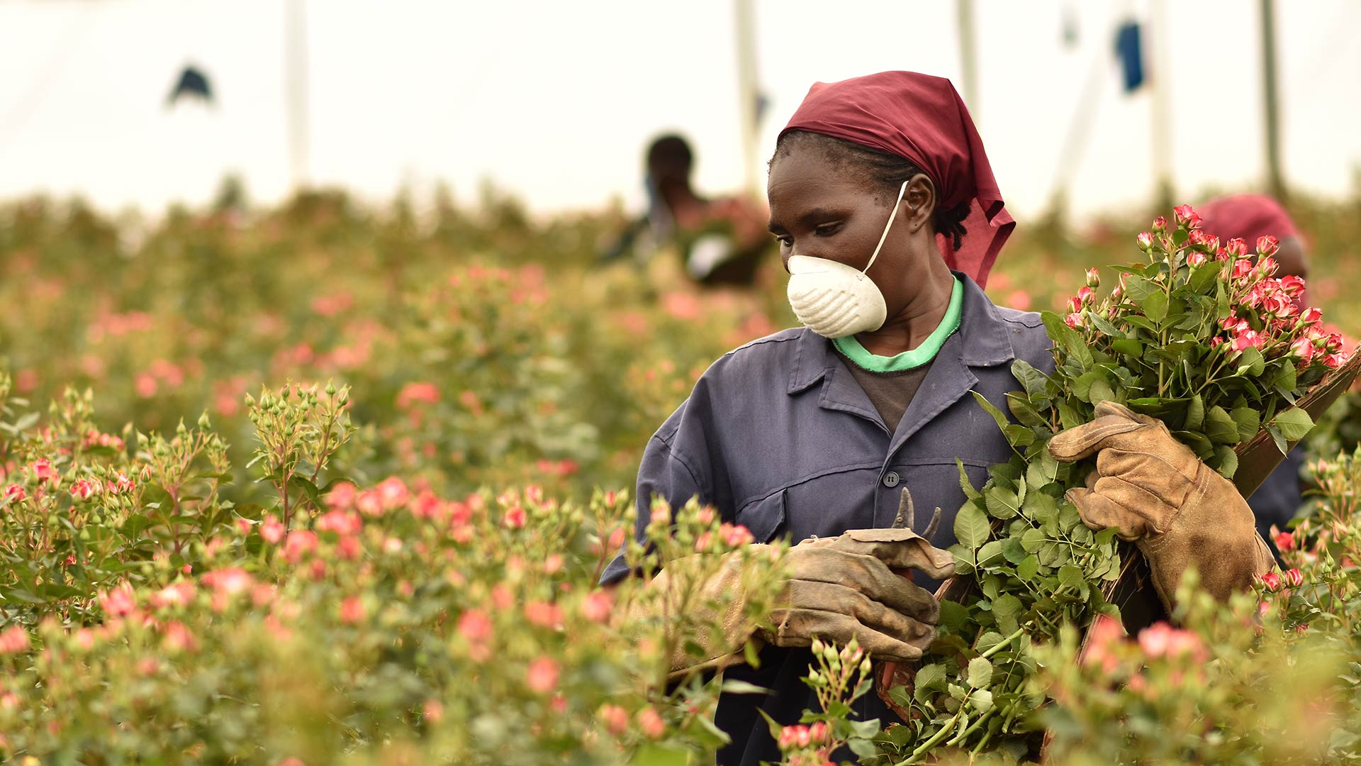 Kenya Flower Exports Take a Blow from Second Lockdowns Across Europe