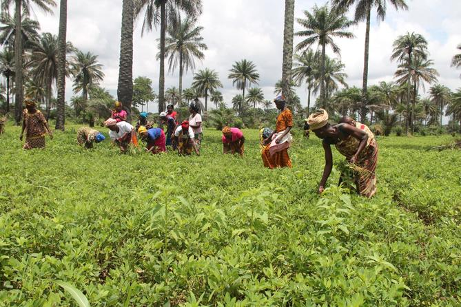 Agriculture in Sierra Leone 2